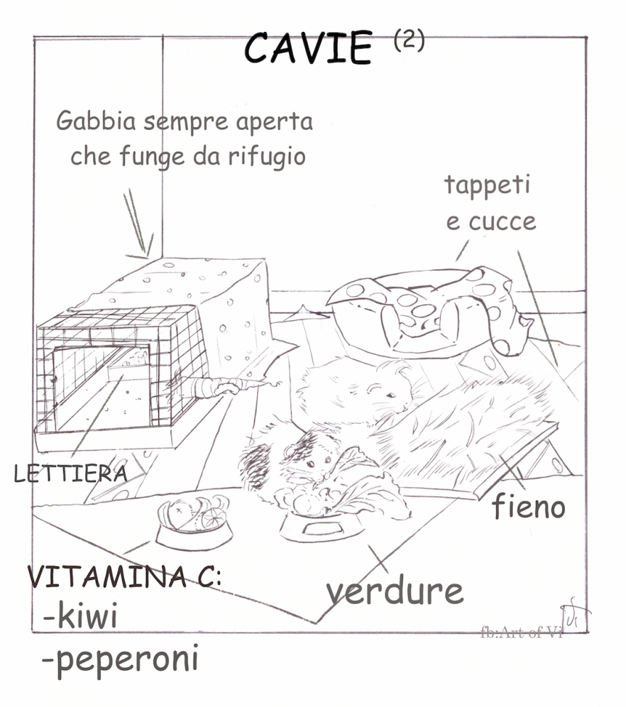 Cavia_peruv art of vi.jpg