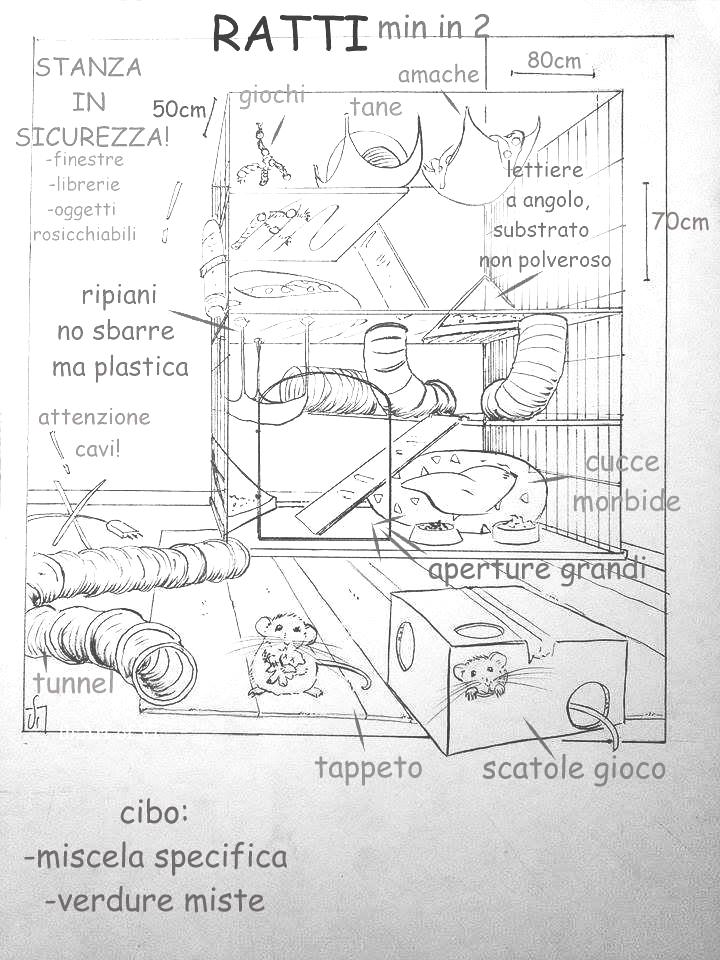 disegno-ratto_mod